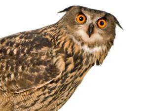 1408385575000-owl